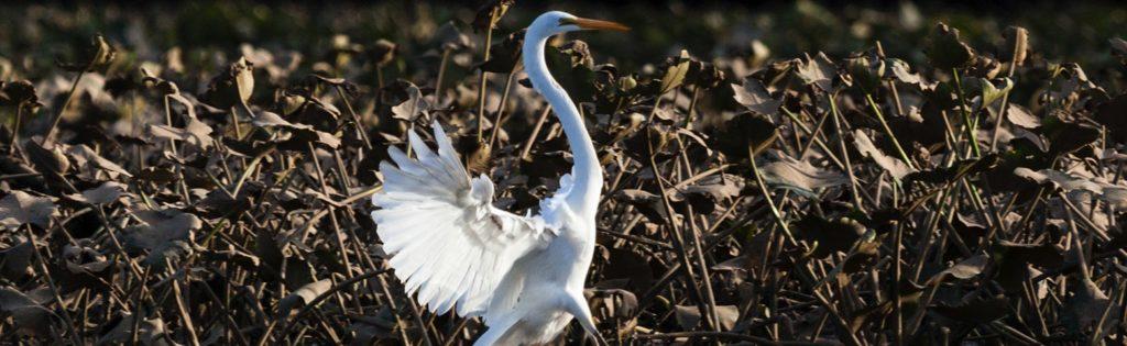 Chesapeake Bay Habitat Protection