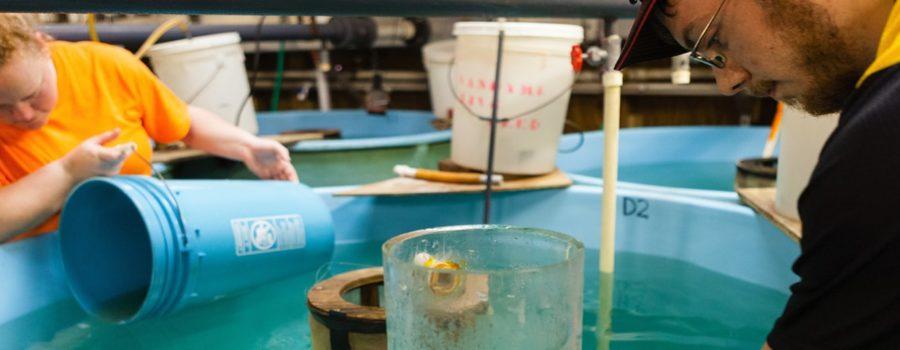 Hazardous Waste and the Chesapeake Bay