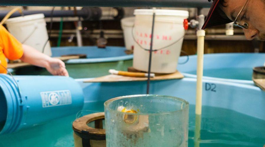 Hazardous Waste + Toxics